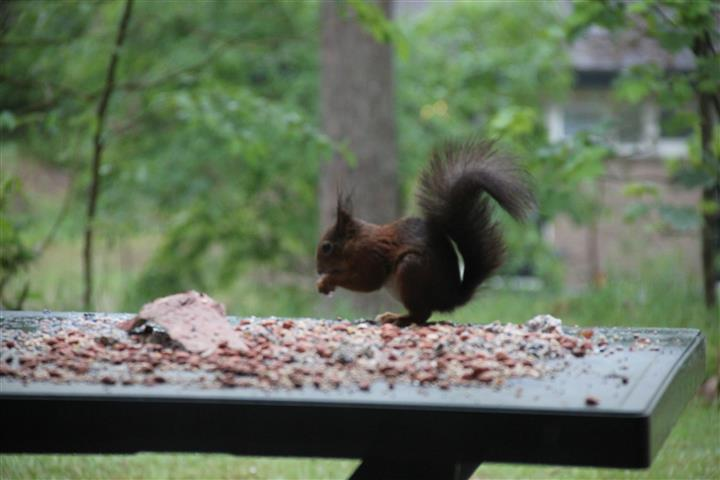 squirrel 1g (Small)